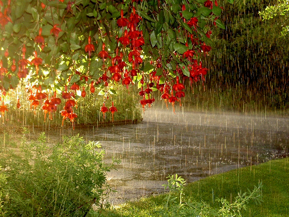 pix_rain_flowers